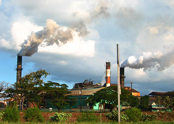 Sugar Refineries and Tobacco Factories In Caribbean